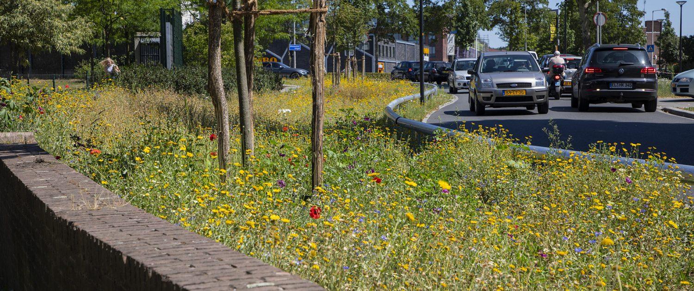 Gele bloemen in de berm van de Hoge Bothofstraat.