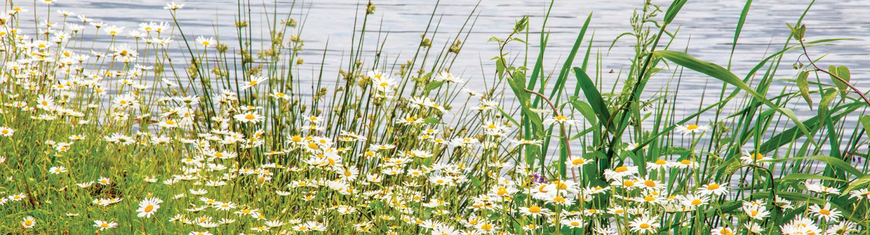 Bloemen aan het water van het Kristalbad